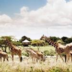 Vinpearl Safari Phú Quốc – Điểm đến không thể bỏ qua